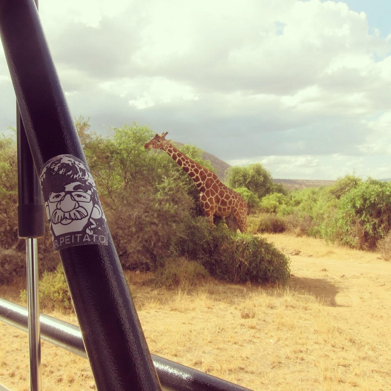 Peipegata sticker slap stickerart  bombardeando Sudafrica